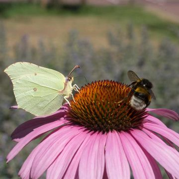 Create Your Own Insect Garden Bundle