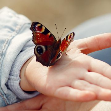 Create Your Own Kids Butterfly Bundle