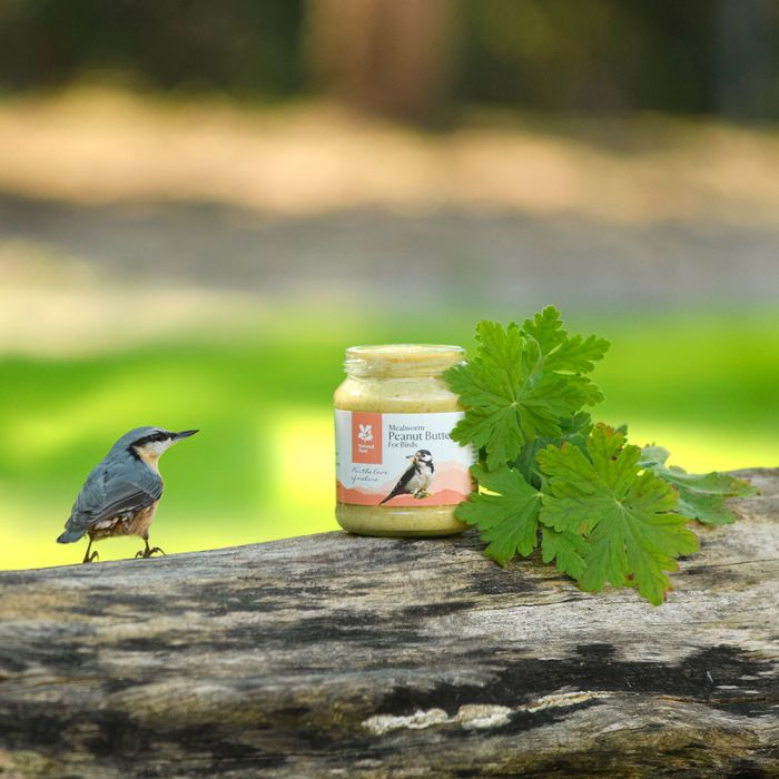 National Trust Peanut Butter with Mealworms for Birds