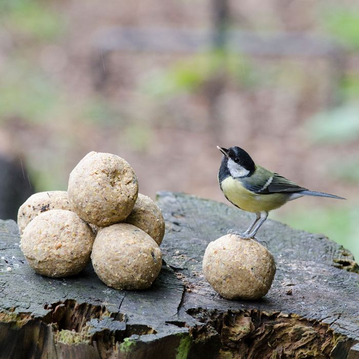 Fat Balls - with Mealworms