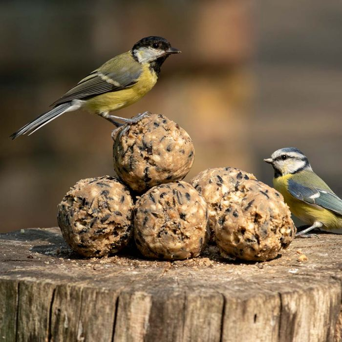 National Trust Ultimate Fat Balls 6 Pack