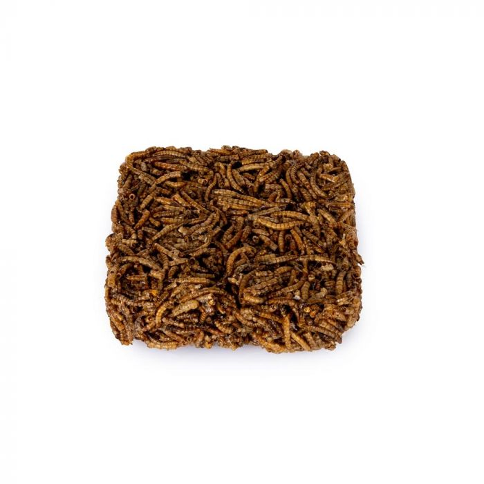 Dried Mealworm Bird Food Square