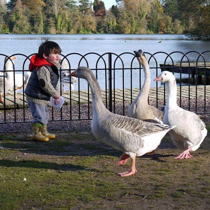 Duck and Swan Sprinkle Food