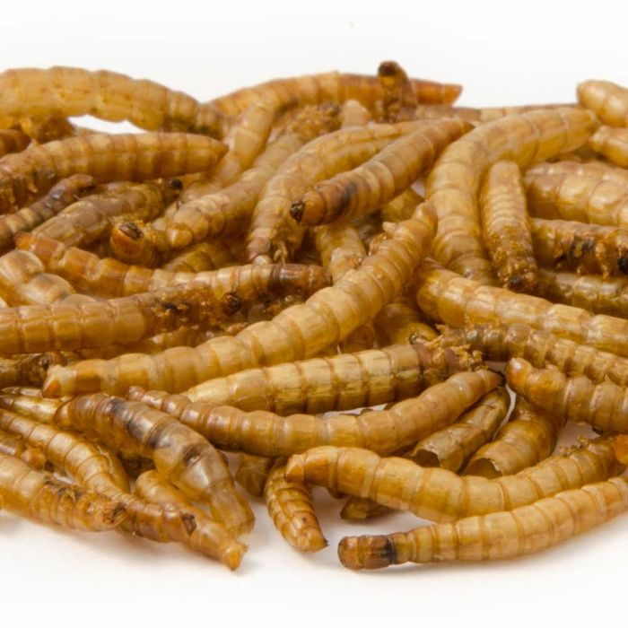 Create Your Own Mealworm Bundle