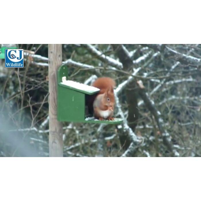 Alberni Squirrel Feeder