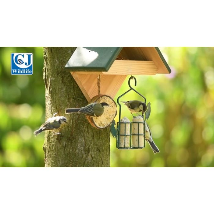 Dried Mealworms - Bird Feed