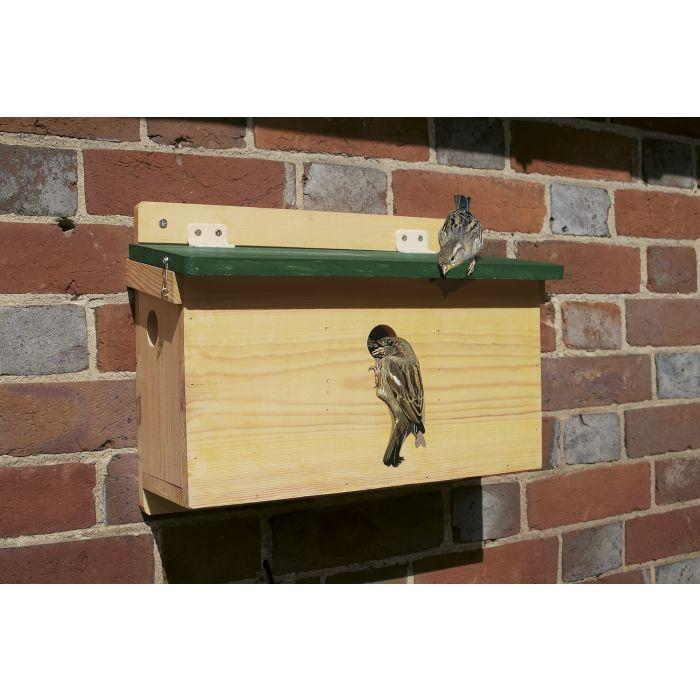 House Sparrow Terrace