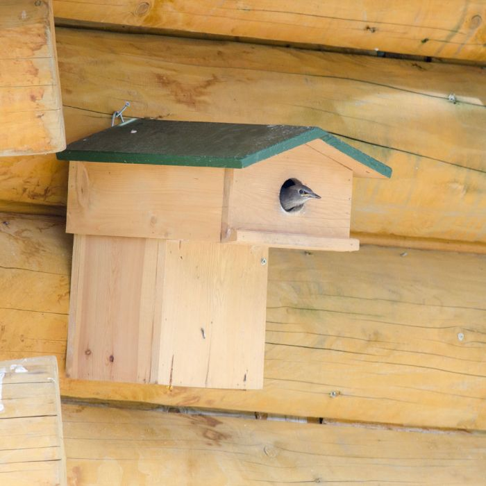 Starling Nest Box with Balcony