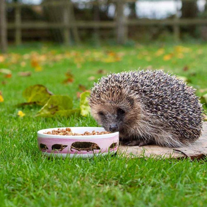 Hedgehog bowl Myrte