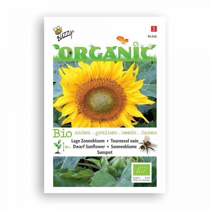 Buzzy® Organic Dwarf Sunflower Seeds - Sunspot