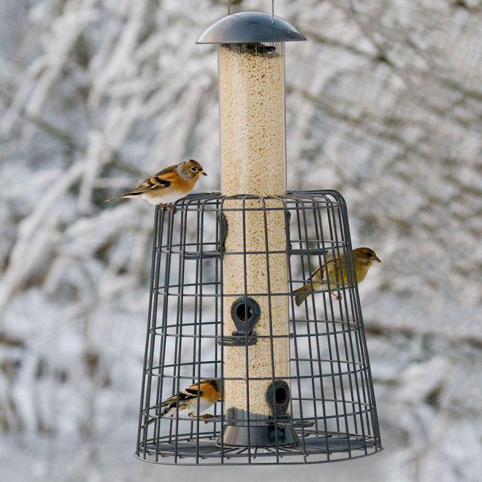 Premium Kibbled Peanuts for Birds