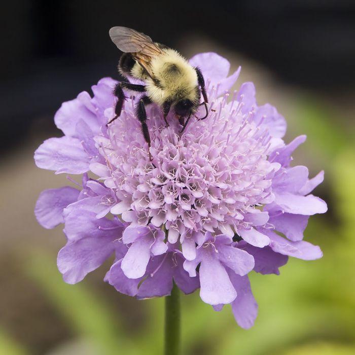 Create Your Own Bee Garden Bundle