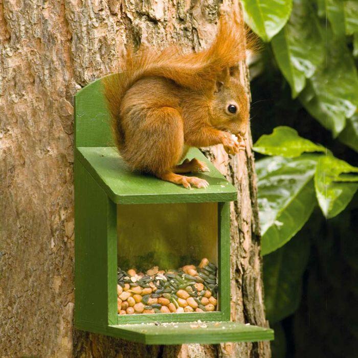 Wooden Squirrel Feeding Pack