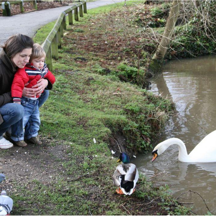 National Trust Duck & Swan Blend 1.5ltr