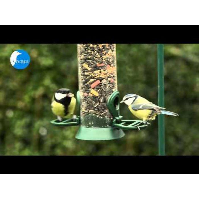 Bird Feeder Seed Mix Plus
