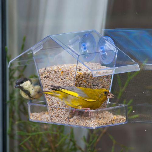The Crete Window Feeding House