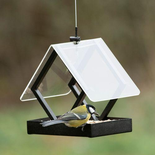 Darwin Bird Seed Bird Feeder