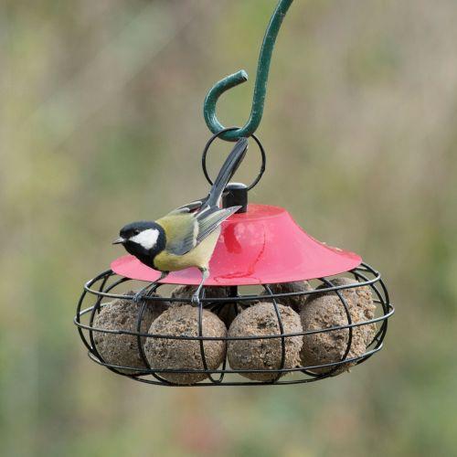 Fremantle Fat Ball Bird Feeder (Red)