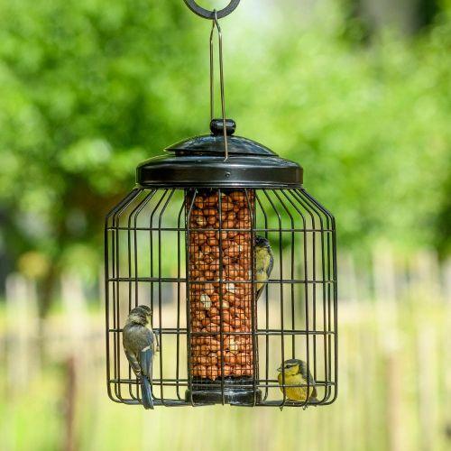 Brussels Peanut Bird Feeder Guardian Pack