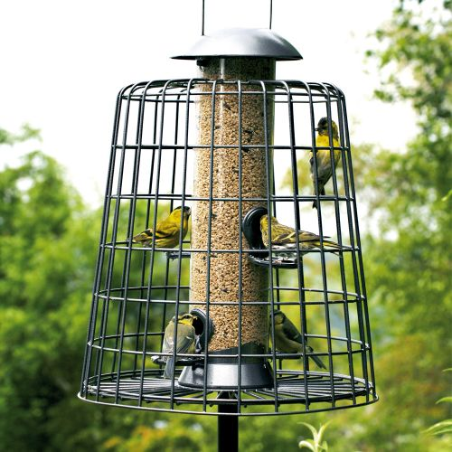 Adventurer 4 Port Seed Feeder with Guardian