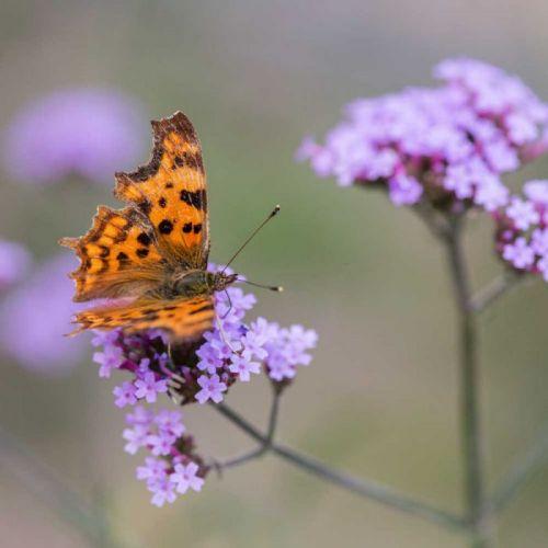 Create Your Own Butterfly Garden Border Bundle