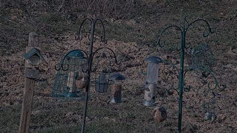 Feeding Station Webcam
