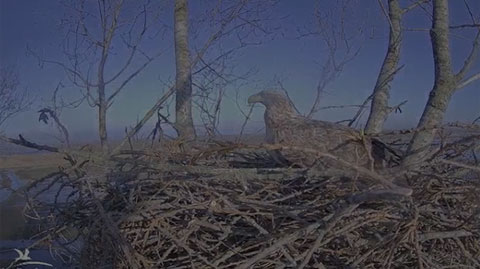 White-Tailed Eagle Webcam