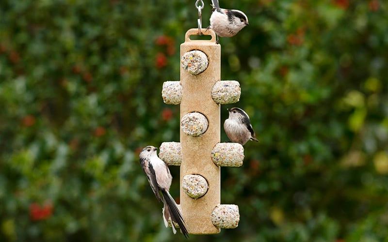 Three birds feeding on a suet log feeder