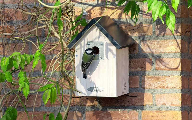 A great tit using an Anchorage nest box