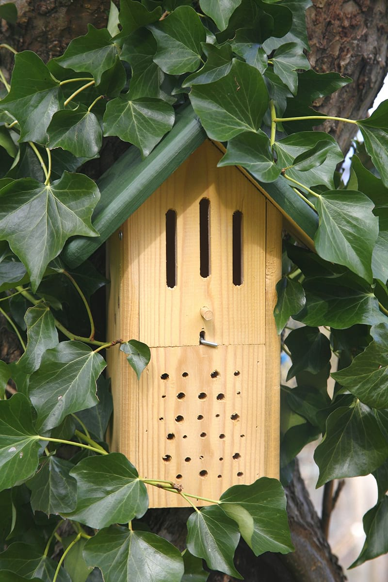 Bee and Butterfly Box