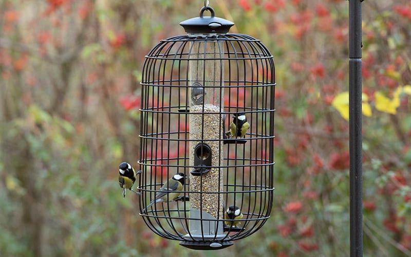 Birds feeding on an Apollo seed feeder